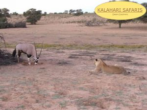Tourism | Tours | Kalahari Safaris